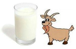 Kozije mlijeko i koziji sir 062615734