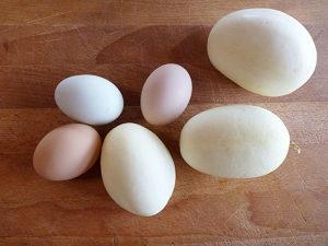 Krastavac ` Dragon`s Egg `/5 semenki