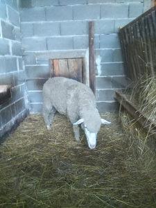 il de france ovce