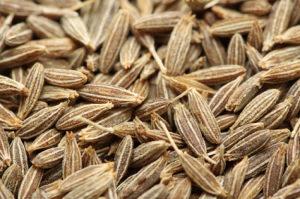 Carum Carvi / Kim /2gr- 700 - semena