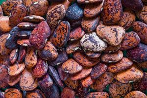 Lima pasulj ` Jackson Wonder Bush`/ 10 semena