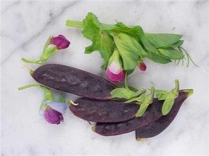 Ljubičasti grašak `Desiree` / 20 semena
