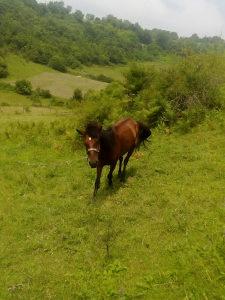 Konj za rad