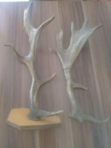 Rogovi jelena lopatara