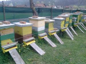 PČELE-PČELINJA DRUŠTVA -5 DRUŠTAVA