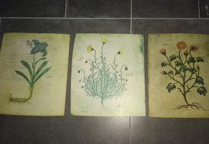 Biljke slike
