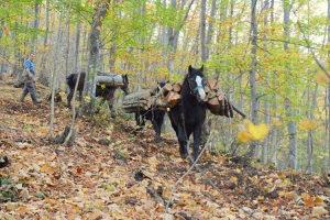 Samaraš za konje