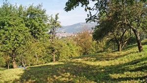 Zemljište - Kobilja glava - Vogošća - 6196 m2