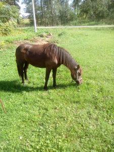 Kobila stara 2 god