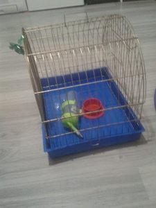 Kavez povoljan
