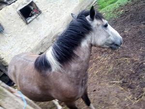 Kobila stars 9 mjeseci