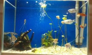 Biljke za akvarijum