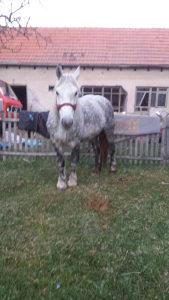 Zeka kobila