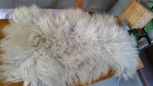 Starine - Velika ovcija kozica