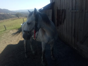 Prodajem konja