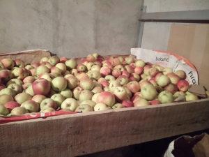 Prodajem domace jabuke