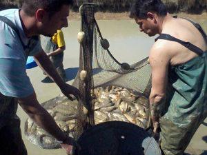 Poribljavanja,strucni savjeti,izlovi,transport ribe