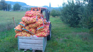 Jabuke industrijske za rakiju i ostalu preradu
