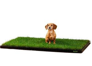 Toalet za psa - WC za psa